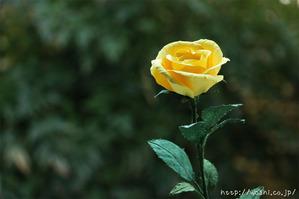 結婚1周年紙婚式や誕生日プレゼントにおすすめの和紙の花「一輪のバラ」自然光