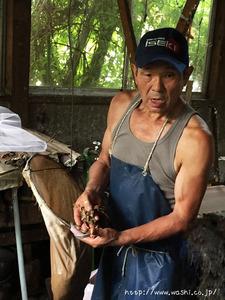 漉く時に欠かせないネリ材(とろろあおい)二俣和紙の斉藤博さんの工房見学