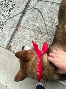 番犬可愛い!