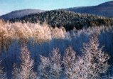 塩狩峠雪景色