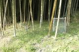 2012 竹の子3