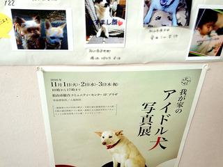 我が家のアイドル犬写真展