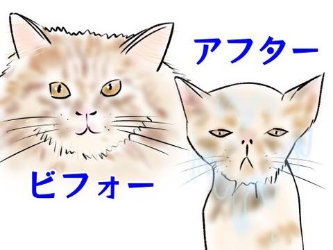 猫シャンプー
