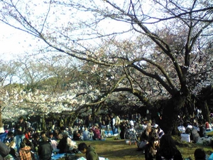 桜の代々木公園