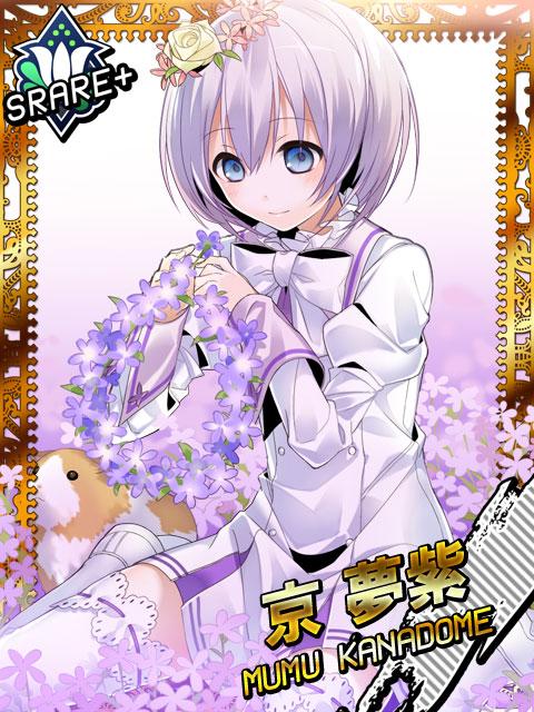 008 京夢紫12