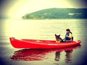 カヌー犬3