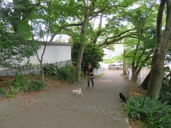 松山城 犬 リフト 4