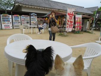 松山城 犬 リフト 6