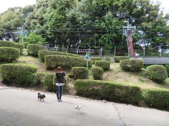松山城 犬 リフト 3