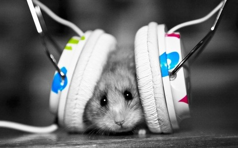 guinea_pig_music