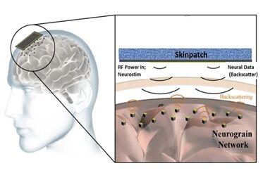 neurograin-700