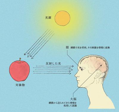 眼の構造と役割