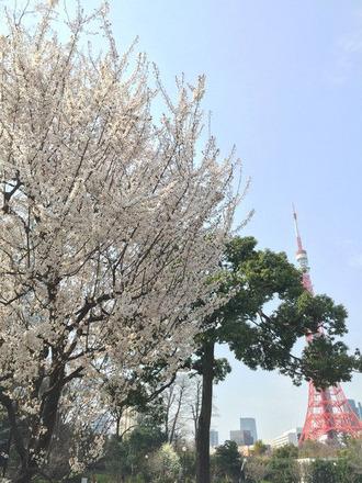 桜と東京タワー20150322IMG_6964