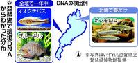 DNA5-1