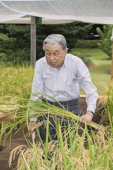 お稲刈り@平成30年9月12日(水)