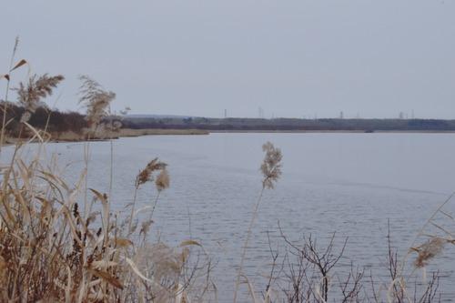 resizeハクチョウの小径から湖風景(小山