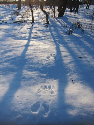 雪上の足跡