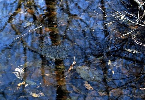 タスオ池卵382-01