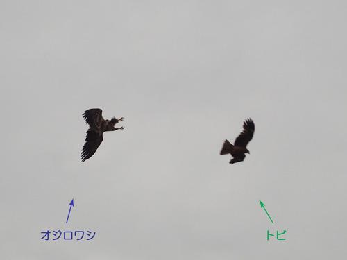 ojiro1mijiiri
