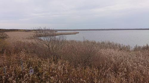 20191015ウトナイ湖岸観察小屋