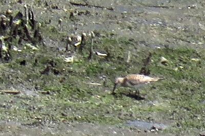 トウネンー1821-潮入りの池 (3)_trim