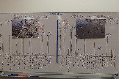 東京湾干潟調査隊ー180825-長縄 (3)