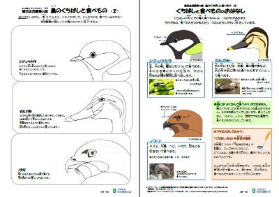 鳥のくちばしWS2
