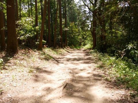 コナラの道