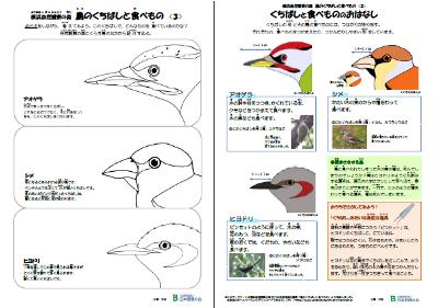 鳥のくちばしWS3