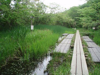 20080428ヘイケの湿地 (4)