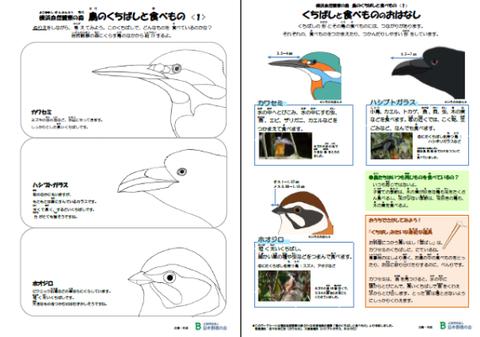 鳥のくちばしと食べものワークシート1画像