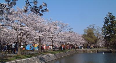 20100424鶴岡公園1