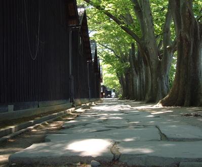 山居倉庫ケヤキ並木