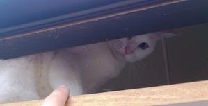 獲物を狙う猫の目