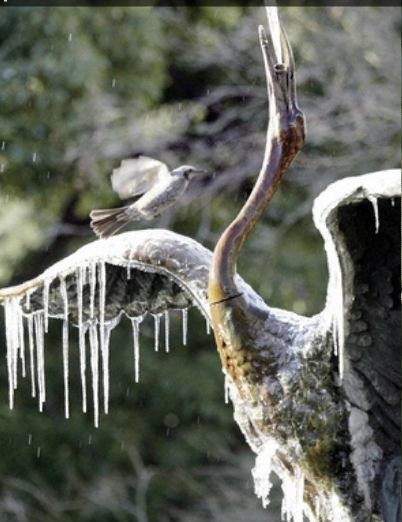 日比谷公園の氷