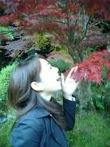 紅葉@てのり