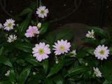 P1010007_20090418miyakowasure
