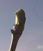 s-kosiabura