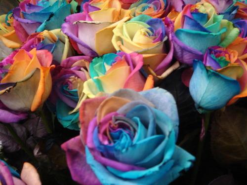 2011_05_14_rose