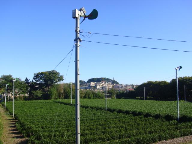 ももおにぎり♪:お茶畑の扇風機っ!