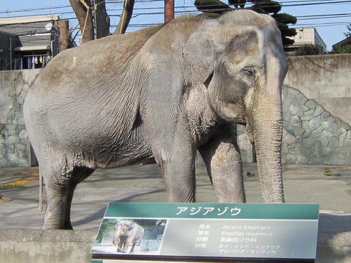象 はなこ