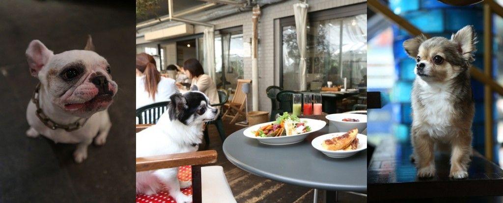 """『犬カフェ』通信 vol.01 まだまだ残暑厳しい中、ワンコと一緒に""""ちょっと1杯""""できるお店を教えちゃいます!!"""