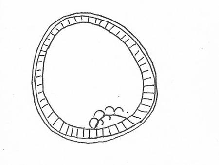 012-初期原腸胚期