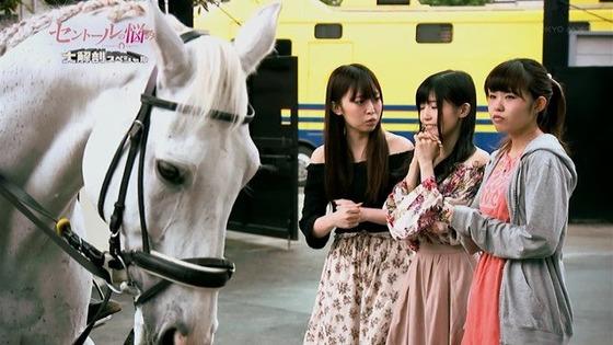 セントールの悩み 大解剖スペシャル 感想:競馬場で特番!馬もかわいかった!