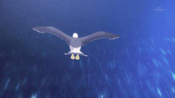 蒼の彼方のフォーリズム 第1話「飛んでます、飛んでますよっ!」感想:ダメダメですぅ
