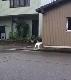 BABYMETAL「4!って鳴く犬」