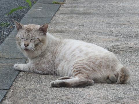 沼津の猫楽園