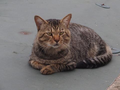 沼津の猫楽園 その4