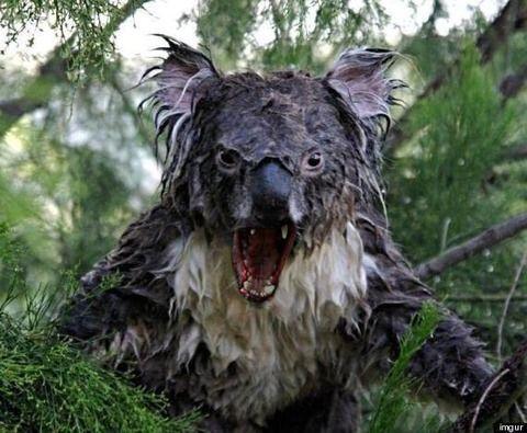 【画像】溺れたコアラ怖すぎワロタwwwwwwwwwwwwwww