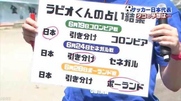 【悲報】日本戦の勝敗を完璧に当てたタコ、出荷されてしまうwwww